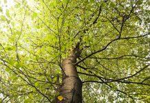 fiskars tree pruner reviews