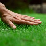 Best Grass Seed Reviews: Guide for Choosing & Buying Top Grass Seed