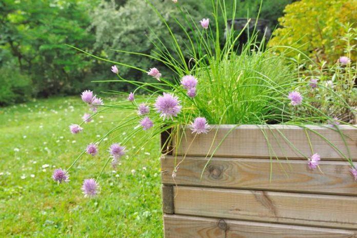 best planter box
