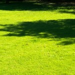 Best Grass Seed for Shade
