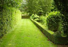black & decker hedge trimmer reviews