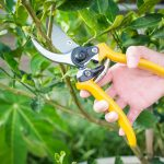 Best Pruning Shears: Buying Guide for Garden and Hand Pruners