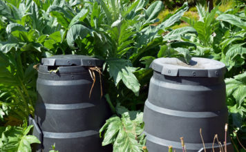 What Are the Best Worms for Composting