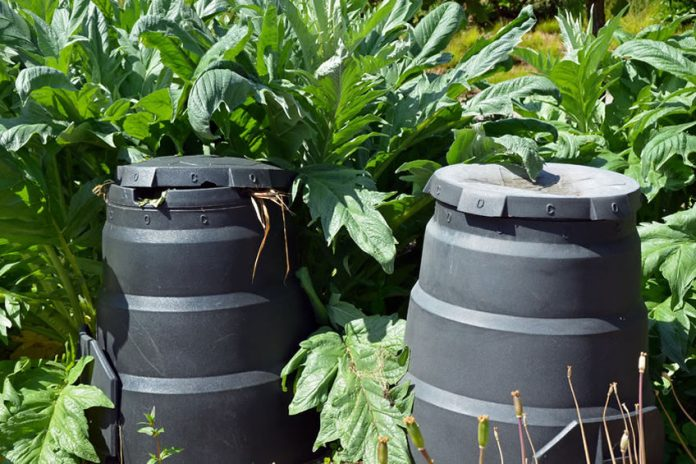 best worms for composting