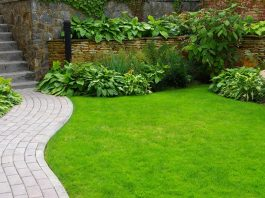 how to seed a lawn
