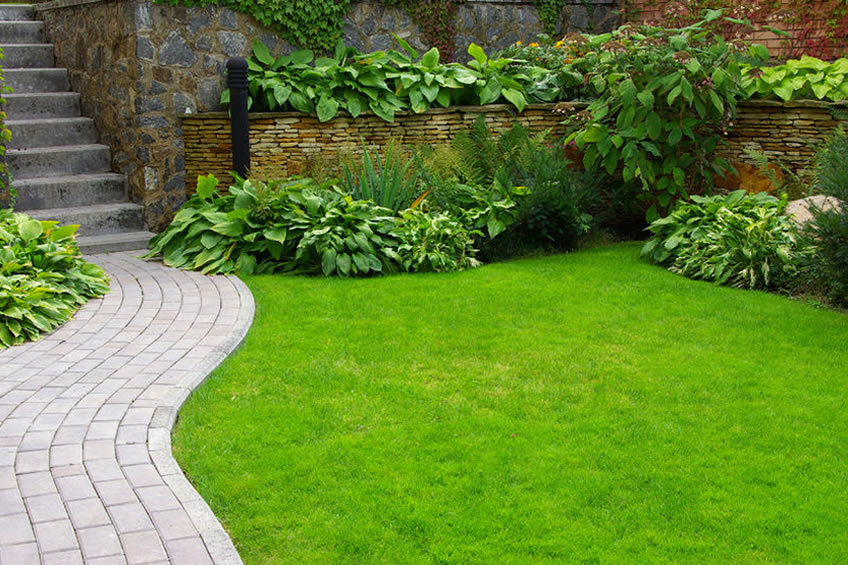 how to start grass seed