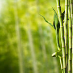 How Fast Does Bamboo Grow? Know It Well to Grow It Well