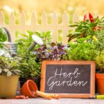 What Are the Most Profitable Herbs to Grow?