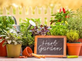 most profitable herbs to grow