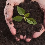 What Is Vermicomposting? Find Out How It Can Help Keep Your Garden Healthy