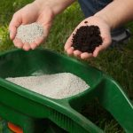 When to Fertilize New Grass: Best Fertilization Schedule for a New Lawn