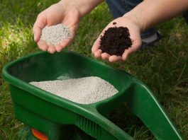 when to fertilize new grass